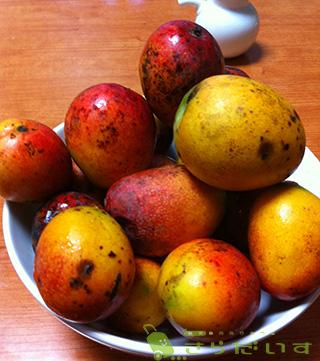 沖縄 ミニマンゴー